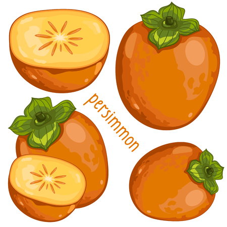 persimmon: Composition of Persimmon on white background Illustration