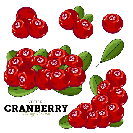 cranberry illustration: Cranberry Composition, Cranberry Leaves, Cranberry Vector, Cartoon illustration of Cranberry. Cranberry Isolated on White Background. Bunch of Cranberry. Illustration