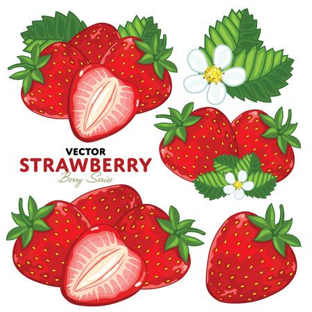 Set Erdbeere Kompositionen, Erdbeerblätter, Erdbeere Vektor, Cartoon Illustration der Erdbeere. Erdbeere getrennt auf weißem Hintergrund. Bunch of saftige Erdbeere Beeren.