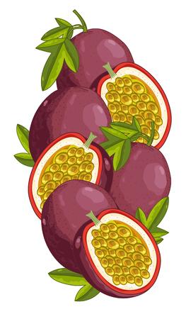 pasion: Fruta de la pasi�n aislado, fruta de la pasi�n del vector. Composici�n de la fruta de la pasi�n sobre fondo blanco. Jugosa fruta de la pasi�n, fruta de la pasi�n de la rebanada. Los alimentos org�nicos, los c�tricos. Comida natural. Vectores