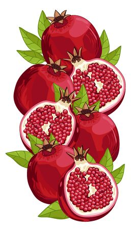 Pomegranate Isolated, Pomegranate Vector. Composition of Pomegranate on white background. Fruit set. Juicy Pomegranate, Pomegranate Slice. Organic food, citrus fruit. Natural food.