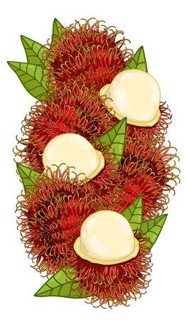 rambutan: Rambutan Isolated, Rambutan Vector. Composition of Rambutan on white background. Rambutan icon, fruit set. Juicy Rambutan, Rambutan Slice. Organic food, citrus fruit. Natural food.