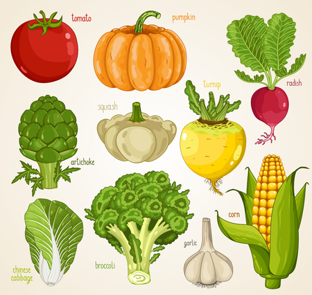 turnip: Vegetables isolated, Vegetable mix. Organic food, farm food. Vegetables vector, vegetables icon. Set of vegetables. Tomato, pumpkin, turnip, artichoke, squash, radish, garlic, broccoli, cabbage icon Illustration