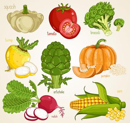 turnip: Vegetables isolated, Vegetable mix. Organic food, farm food. Vegetables vector, vegetables icon. Set of vegetables. Fresh vegetable, tomato, pumpkin, turnip, artichoke, squash, radish, broccoli.