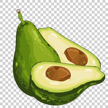 Avocado geïsoleerd, Avocado op transparante achtergrond. Avocado pictogram, vector avocado. Biologisch voedsel, boerderij voedsel. Groente uit de tuin. Avocado cartoon illustratie, Avocado samenstelling.
