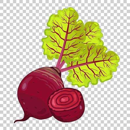 Beet isolated, Beet on transparent background. Beet icon, vector Beet. Organic food, farm food. Vegetable from the garden. Beet composition, cartoon beet illustration. Ilustração
