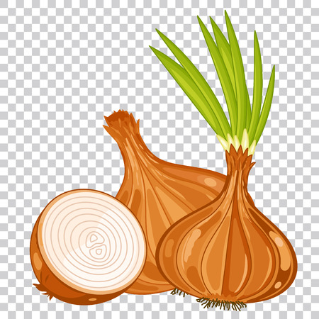 Onion isolated, Onion on transparent background. Onion icon, vector Onion. Spicy food, spicy ingredient. Organic food, farm food. vegetable from the garden. Cartoon Onion, Onion composition. Ilustrace