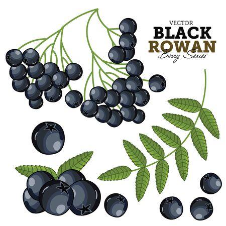 eberesche: Schwarz Rowan auf wei�em Hintergrund.