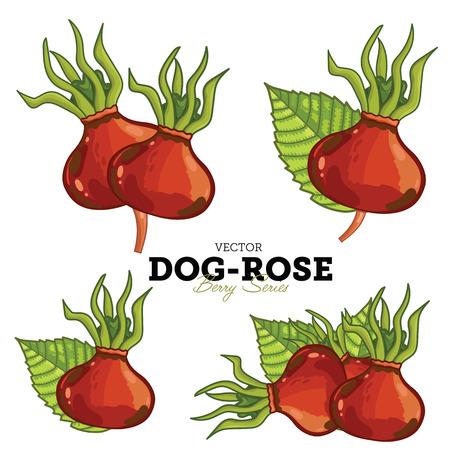 wild rose: Dog-Rose isolated on white background. Stock Photo