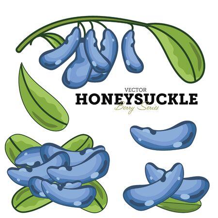 honeysuckle: Honeysuckle isolated on white background.