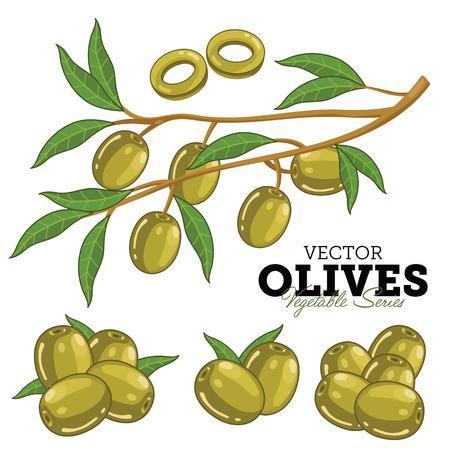 foglie ulivo: Olive con foglie. Serie di verdure. Isolato su sfondo bianco.