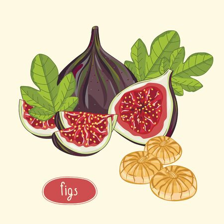 Figs fruits isolated on lights background. Vector illustration.