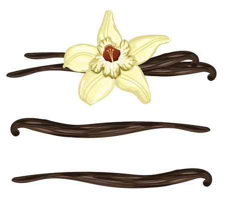 Vanille-Sticks oder Hülsen mit Blume auf einem weißen Hintergrund. Isolierte Vanille, Vektor-Illustration