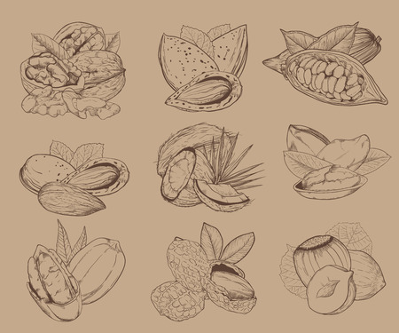mixed nuts: Isolated nuts on light brown background. Engraved vector illustration of leaves and nuts of pistachio, pecan, walnut, coconut, cocoa, hazelnut, almond, peanut. Mixed nuts.