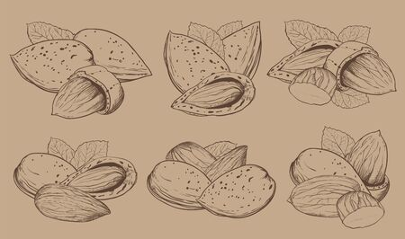 Almond on light brown background. Almond seeds. Engraved vector illustration of leaves and nuts of Almond. Isolated almond.