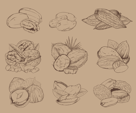 pistachio: Isolated nuts on light brown background. Engraved vector illustration of leaves and nuts of pistachio, pecan, walnut, coconut, cocoa, hazelnut, almond, peanut. Mixed nuts.