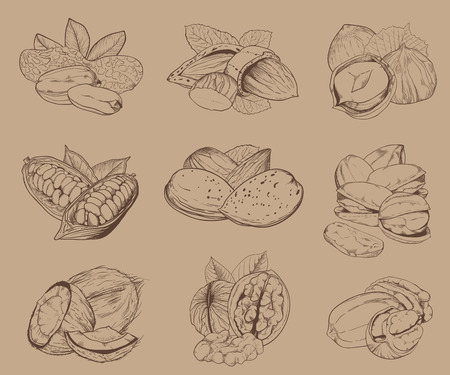 pecan: Isolated nuts on light brown background. Engraved vector illustration of leaves and nuts of pistachio, pecan, walnut, coconut, cocoa, hazelnut, almond, peanut. Mixed nuts.