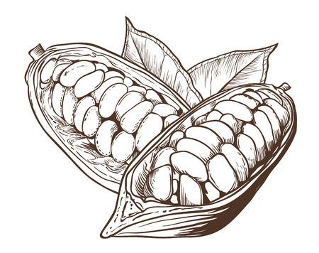 Cacao vector op een witte achtergrond. Cacaobonen. Vector Illustratie