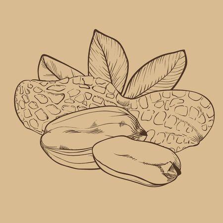 nourishing: Peanut vector isolated on brown background. Illustration