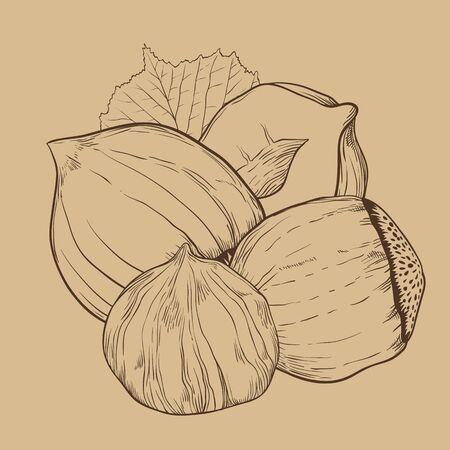 nourishment: Hazelnut vector isolated on brown background. Illustration