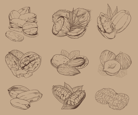mixed nuts: Isolated nuts on light brown background. Engraved raster illustration of leaves and nuts of pistachio, pecan, walnut, coconut, cocoa, hazelnut, almond, peanut. Mixed nuts.