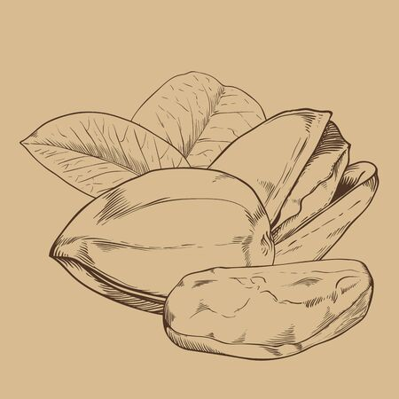 pistachio: Pistachio vector isolated on brown background. Pistachio seeds. Engraved vector illustration of leaves and nuts of pistachio. Pistachio in vintage style. Illustration