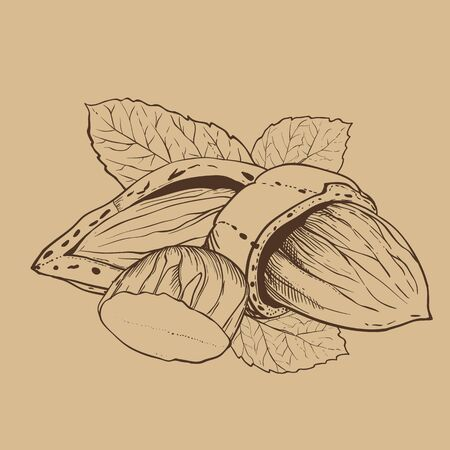 bitmap: Almond bitmap isolated on brown background. Almond seeds. Engraved bitmap illustration of leaves and nuts of Almond. Almond in vintage style.