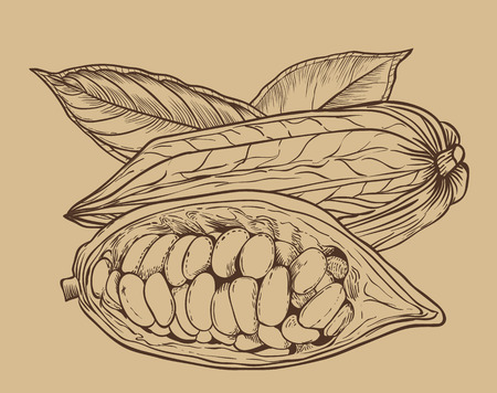 bitmap: Cocoa bitmap isolated on brown background. Cocoa beans. Engraved bitmap illustration of leaves and nuts of cocoa. Cocoa in vintage style. Stock Photo