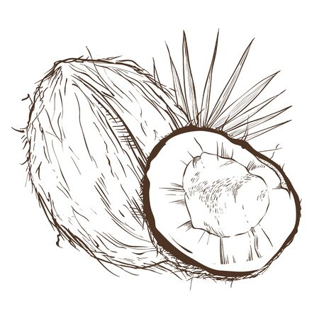 bitmap: Coconut bitmap isolated on white background. Stock Photo