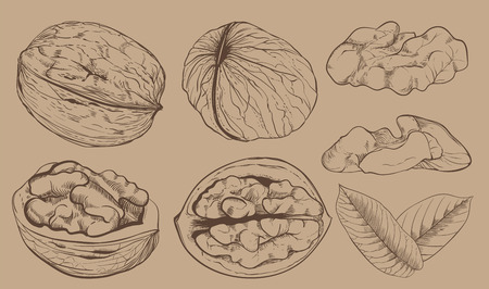walnut: Walnut on light brown background.