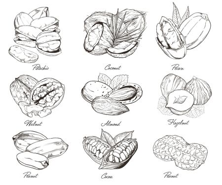 mixed nuts: Isolated nuts on white background. Engraved bitmap illustration of leaves and nuts of pistachio, pecan, walnut, coconut, cocoa, hazelnut, almond, peanut. Set of mixed nuts. Stock Photo