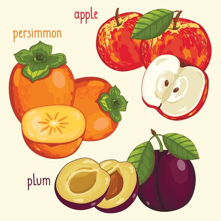 mix fruit: Set of fruit mix vector isolated. Healthy eat. Apple, persimmon and plum fruit. Natural organic food. Ingredients for a vegetarian meal. Sweet and ripe summer fruit.