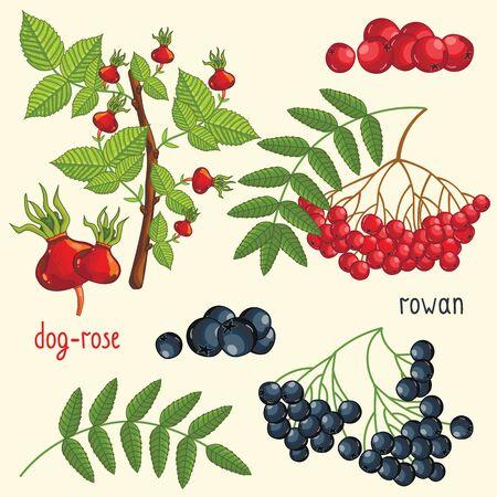 mix fruit: Fresh fruit mix isolated, vector illustration