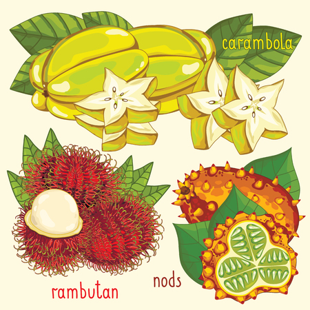 rambutan: Set of fruit mix vector isolated. Healthy eat. Carambola, rambutan and nods fruit. Natural organic food. Ingredients for a vegetarian meal. Sweet and ripe tropical summer fruit.