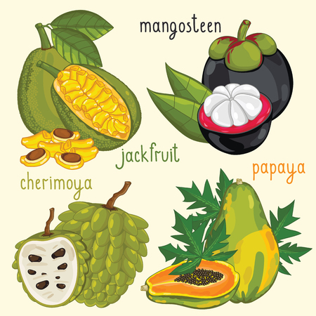 mix fruit: Set of fruit mix vector isolated. Healthy eat. Mangosteen, jackfruit and papaya fruit. Natural organic food. Ingredients for a vegetarian meal. Sweet and ripe summer fruit. Illustration