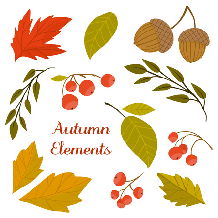 fall leaf: Autumn background with fall leaf vector illustration