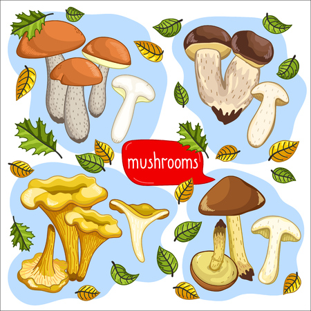 cep: Different types of mushrooms set, chanterelle, cep, porcini, brown cap boletus isolated on white background vector illustration