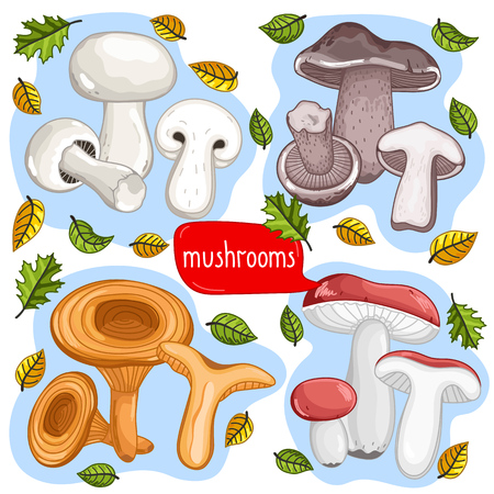 cep: Different types of mushrooms set isolated on white background vector illustration