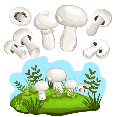 champignon: Champignon mushroom set isolated on white background vector illustration Illustration