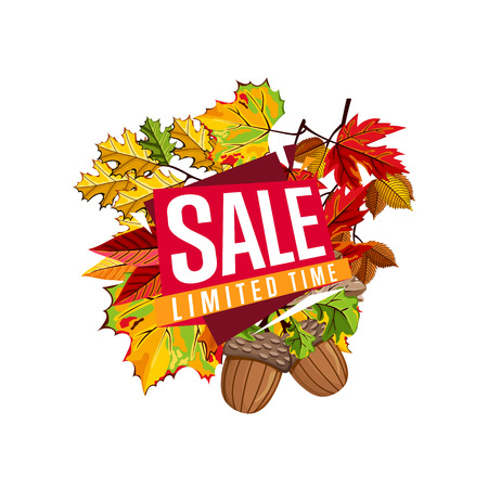proposition: Autumn sale design template, vector illustration. Limited time sale proposition banner with colorful leaves on white background. Advertisement about autumnal discount. Poster design for shop