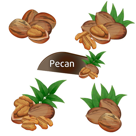 Pecan kernel in nutshell with leaves set