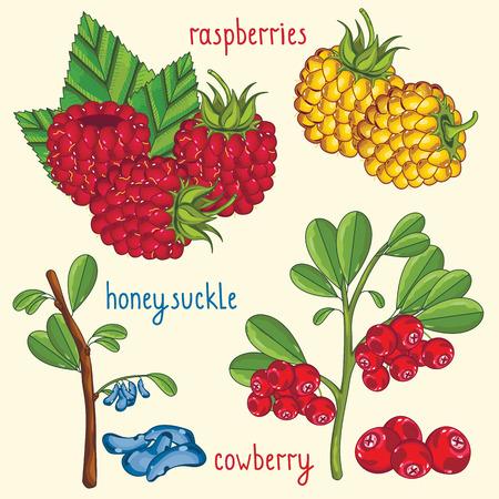 Fresh berries mix isolated, raster illustration