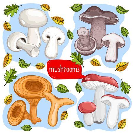 cep: Different types of mushrooms raster illustration