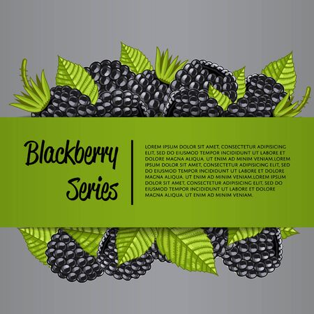 A Blackberry series banner with organic berry vector illustration. Natural fruit poster, healthy sweet diet, vegetarian nutrition. Fresh berry fruit advertising promo with ripe blackberry and leaves. Illustration