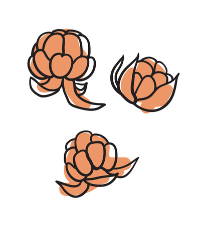 Berries hand drawn isolated icon