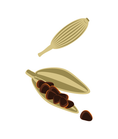 Cardamom pods isolated vector icon Ilustracja