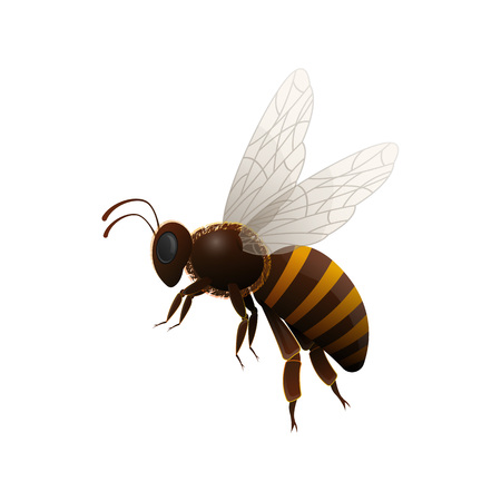 Striped flying honey bee side view isolated icon on white background. Insect symbol for natural, healthy and organic food production vector illustration in cartoon style