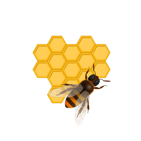 Organic farming concept with honeybee on honeycomb isolated on white background. Traditional and healthy vegan food, sweet delicacy vector illustration. Insect sign for natural food production design.