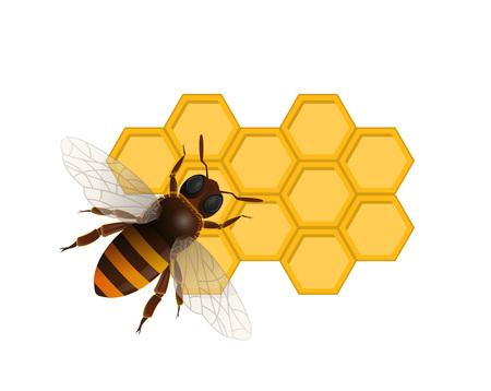 Organisch zoet voedingsconcept met honingbij op honingraat die op witte achtergrond wordt geïsoleerd. Traditionele en gezonde veganistische product vectorillustratie. Insectenteken voor het ontwerp van de natuurlijke voedselproductie.