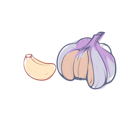 Ripe garlic isolated vector icon